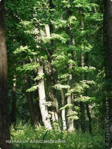 закоулки нашего леса фото 1
