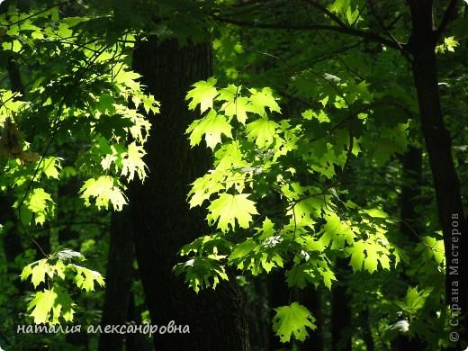 закоулки нашего леса фото 3