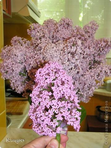 Цветочки для няни в детский сад...просто так! фото 5