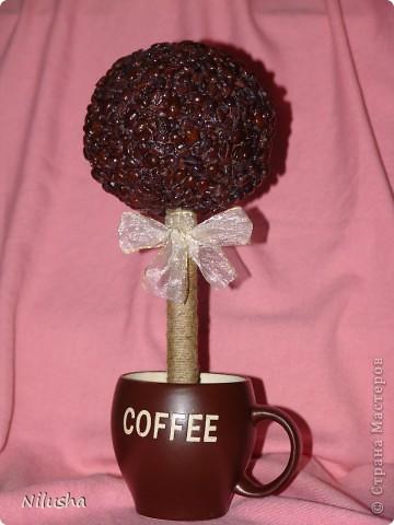 Мое кофейное деревцо. фото 1
