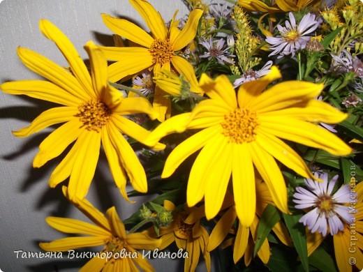 Здравствуйте жители СМ!  Сегодня я вам расскажу о красивом растении - топинамбур  Топинамбур – вкусный и полезный корнеплод, который весьма незаслуженно обделен вниманием. Это растение принадлежит к семейству сложноцветных и считается одним из близких родственников подсолнечника. Его еще называют земляной грушей, солнечным корнем, иерусалимским артишоком и диким подсолнухом.  Это многолетние растение, у которого прямые тонкие стебли, а также жесткие шероховатые листья. Топинамбур может достигать в высоту до 3 метров. К корневищам прикреплены продолговатые клубни, которые могут иметь различную окраску, от желтоватого до коричневого, иногда встречаются красные. Созревают они за один сезон, примерно за 125 дней и после первых заморозков полностью готовы к употреблению. Клубни неприхотливы к морозу, что обеспечивает свежий урожай ранней весной, то есть топинамбур без какого-либо  ущерба может перезимовать в почве.  Родиной этого растения считается Северная Америка. Там оно распространено практически на всем континенте. Используется очень давно, еще индейцами. На территорию Европы топинамбур попал в 1605 году. Он был завезен путешественником Самюэлем де Шамплайном во Францию. В России этот корнеплод оказался в XVIII веке, но, к глубокому сожалению, не стал достойно популярным.Полезные и целебные свойства  Топинамбур – это не только вкусный продукт, который можно использовать, как в сыром, так и в обработанном виде, это универсальное лекарство от некоторых  заболеваний. Сок топинамбура является отличным средством от изжоги, так как он способен снижать кислотность. Сок этого корнеплода помогает при запорах и болях в животе различной этиологии.  Так же он обладает противовоспалительным действием и успешно помогает лечить полиартриты.  Топинамбур благотворно сказывается на работе сердечнососудистой системы. Его рекомендуют употреблять при гипертонии, атеросклерозе, тахикардии и ишемической болезни сердца.  Отвар топинамбура обладает сахароснижающей способностью. Это лучшее с