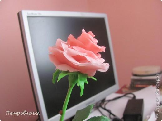 Вот еще одна роза в мой букет. фото 2