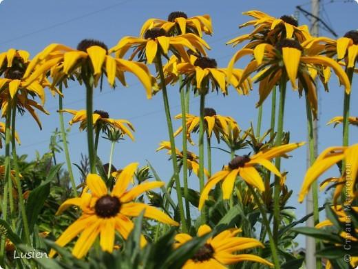 Я очень люблю фотографировать цветы и всяких букашек, жучков, паучков:) И хочу показать вам фотографии, которые я сделала в этом году:) фото 2