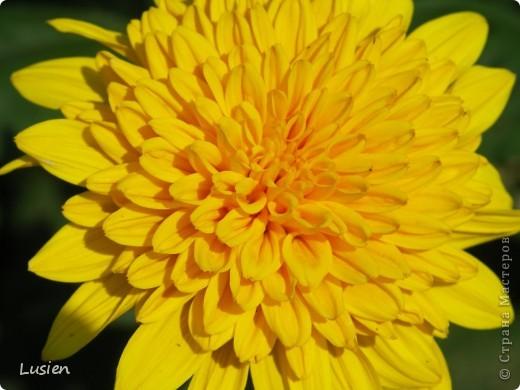 Я очень люблю фотографировать цветы и всяких букашек, жучков, паучков:) И хочу показать вам фотографии, которые я сделала в этом году:) фото 4