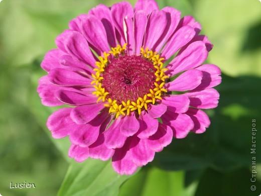 Я очень люблю фотографировать цветы и всяких букашек, жучков, паучков:) И хочу показать вам фотографии, которые я сделала в этом году:) фото 5
