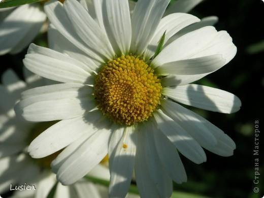Я очень люблю фотографировать цветы и всяких букашек, жучков, паучков:) И хочу показать вам фотографии, которые я сделала в этом году:) фото 6
