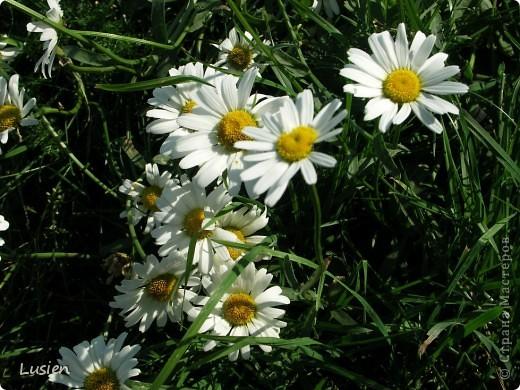 Я очень люблю фотографировать цветы и всяких букашек, жучков, паучков:) И хочу показать вам фотографии, которые я сделала в этом году:) фото 7