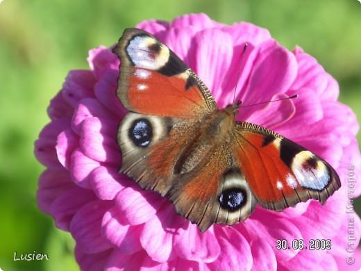 Я очень люблю фотографировать цветы и всяких букашек, жучков, паучков:) И хочу показать вам фотографии, которые я сделала в этом году:) фото 22