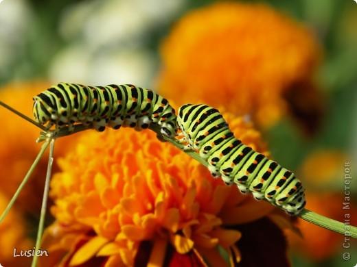 Я очень люблю фотографировать цветы и всяких букашек, жучков, паучков:) И хочу показать вам фотографии, которые я сделала в этом году:) фото 1