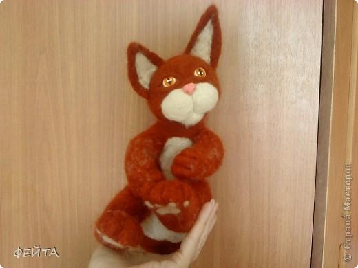 Котик фото 4
