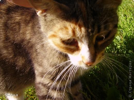 Знакомьтесь! Это наша кошка Мурка. Год назад она была ещё дикой, жила у нас в сарае и приходила только, чтобы попросить еды. фото 1