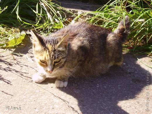 Знакомьтесь! Это наша кошка Мурка. Год назад она была ещё дикой, жила у нас в сарае и приходила только, чтобы попросить еды. фото 5