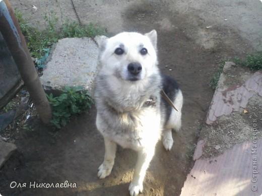 Вот такая милая собака (керамическая фигура), в ужасном состоянии, была выброшена и подобрана нами. фото 9