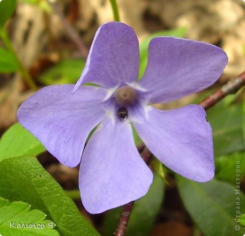 здесь будут весенние цветочки..... фото 10