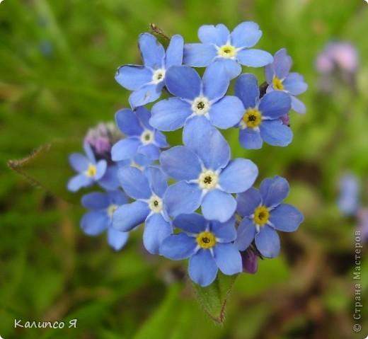 здесь будут весенние цветочки..... фото 12