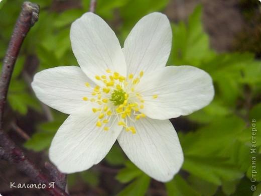 здесь будут весенние цветочки..... фото 1