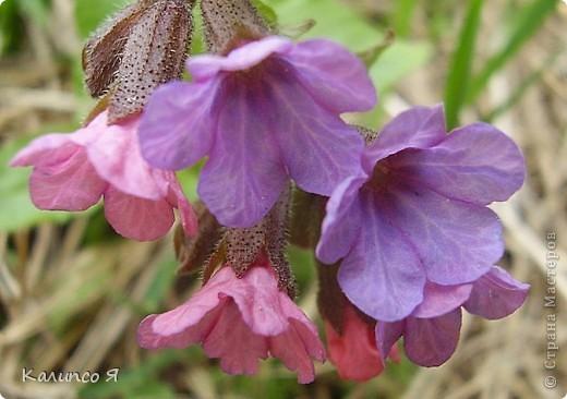 здесь будут весенние цветочки..... фото 3