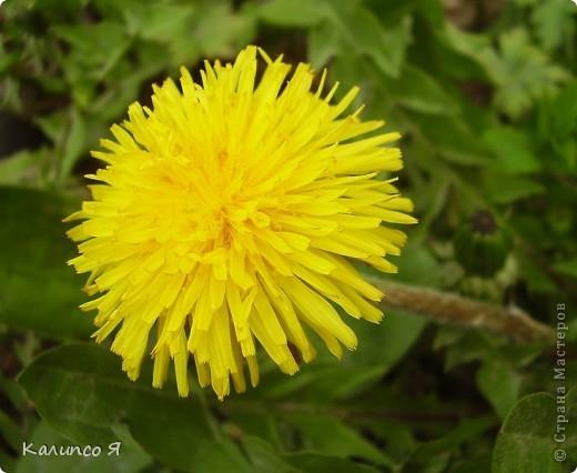 здесь будут весенние цветочки..... фото 5