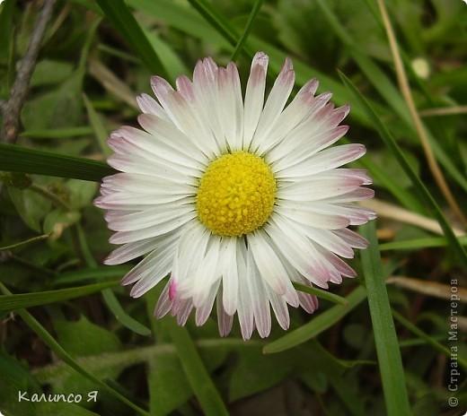 здесь будут весенние цветочки..... фото 6