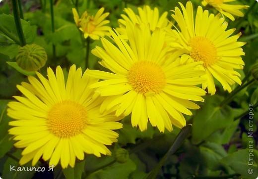 здесь будут весенние цветочки..... фото 8