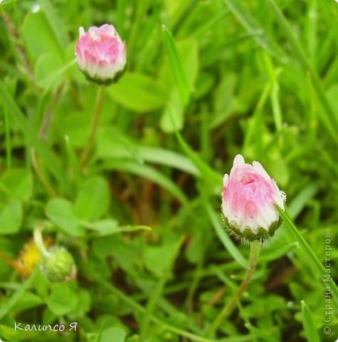 здесь будут весенние цветочки..... фото 9