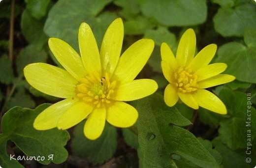 здесь будут весенние цветочки..... фото 11