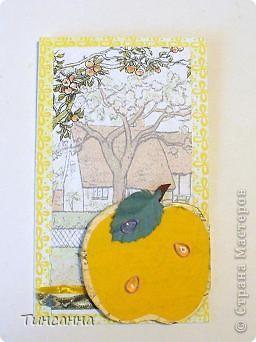 Пришел Яблочный Спас-пора собирать яблоки в садах. фото 5