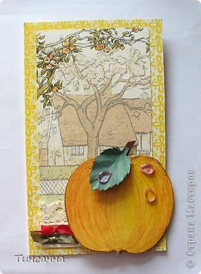 Пришел Яблочный Спас-пора собирать яблоки в садах. фото 1
