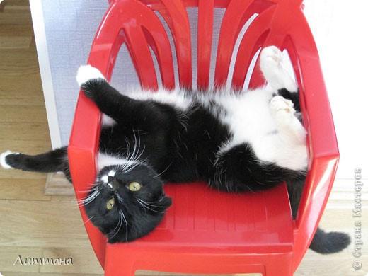 Есть у меня подружка,её зовут Лера и ей десять лет. Лера котов не любит,она их обожает,нет - она без них просто жить не может! И не живёт,а живёт с котами,которых целых три: это Масик,большой озорник,что и видно, фото 1
