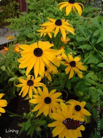 Садовая гвоздика фото 17