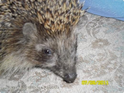 Вот такая гостья уже много лет приходит к нам в гости. фото 4