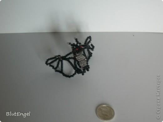 Нетопырь фото 2
