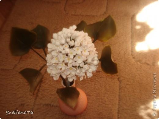 Сирень из запекаемой пластики, листья из холодного фарфора. фото 1