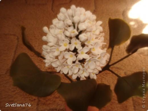 Сирень из запекаемой пластики, листья из холодного фарфора. фото 3
