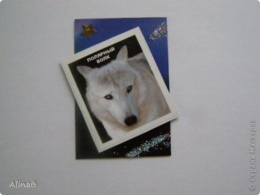"""Серия""""Волки"""".Волки приклеены на вспненый скотч,изображение3d. фото 3"""