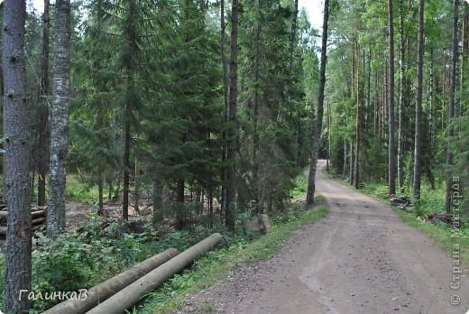 Сегодня мы отправимся в Смоленский скит. Дорога в него пролегает через лес - красивый и величественный. Расстояние до скита примерно 3 км фото 1