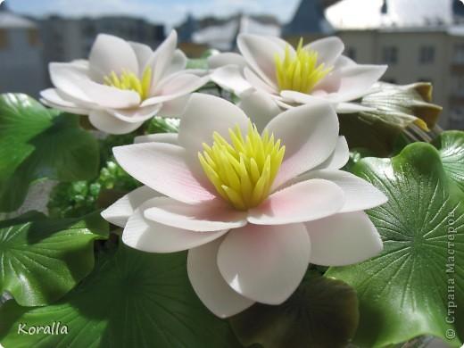 Очень люблю этот цветок! Боялась, что не смогу слепить. Не стала делать серединку такой, как у настоящих лотосов, как-то искусственной она мне показалась, судя по фото в нете. Лепестки тонировала пастелью, а листья маслом. В стеклянную салатницу поставила оазис, а вокруг насыпала морскую соль довольно натурального цвета. И посадила цветочки. Теперь не только удовольствие для глаз, но и приятный запах хвои ))) фото 11