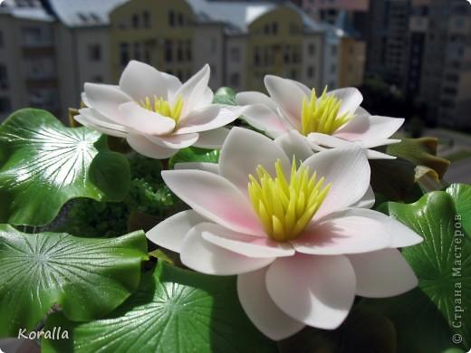 Очень люблю этот цветок! Боялась, что не смогу слепить. Не стала делать серединку такой, как у настоящих лотосов, как-то искусственной она мне показалась, судя по фото в нете. Лепестки тонировала пастелью, а листья маслом. В стеклянную салатницу поставила оазис, а вокруг насыпала морскую соль довольно натурального цвета. И посадила цветочки. Теперь не только удовольствие для глаз, но и приятный запах хвои ))) фото 12