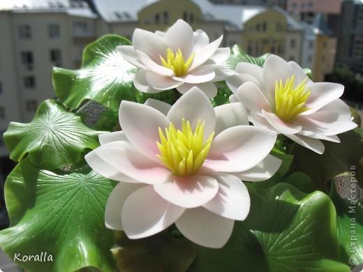 Очень люблю этот цветок! Боялась, что не смогу слепить. Не стала делать серединку такой, как у настоящих лотосов, как-то искусственной она мне показалась, судя по фото в нете. Лепестки тонировала пастелью, а листья маслом. В стеклянную салатницу поставила оазис, а вокруг насыпала морскую соль довольно натурального цвета. И посадила цветочки. Теперь не только удовольствие для глаз, но и приятный запах хвои ))) фото 13