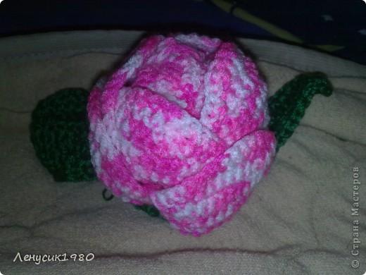 бутон розы фото 2
