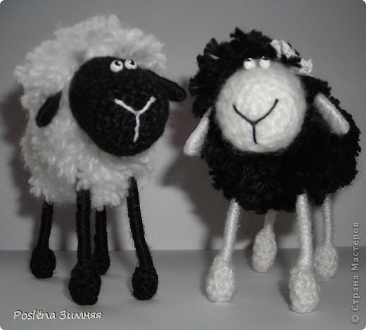 Пара овечек. фото 1