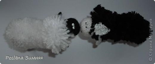 Пара овечек. фото 9