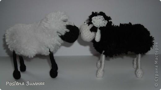 Пара овечек. фото 8