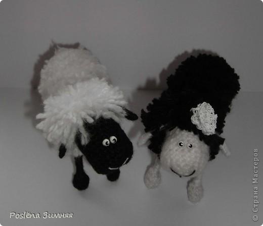 Пара овечек. фото 6