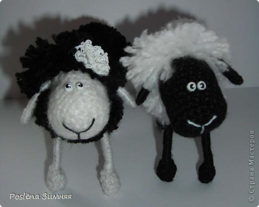 Пара овечек. фото 4