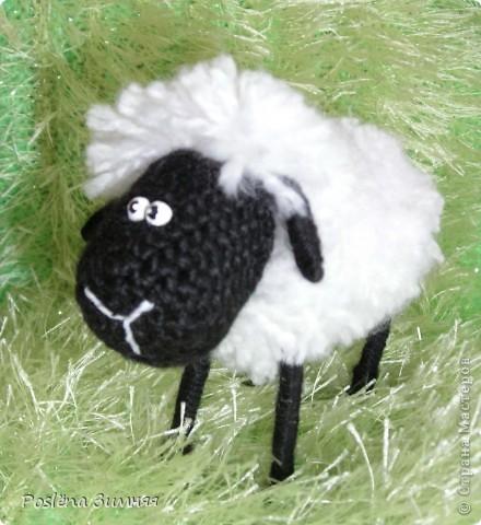 Пара овечек. фото 25