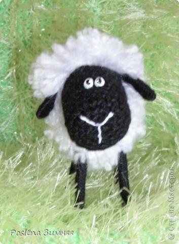 Пара овечек. фото 26