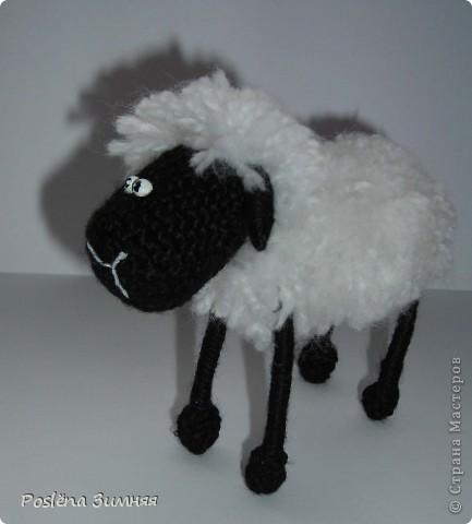 Пара овечек. фото 23