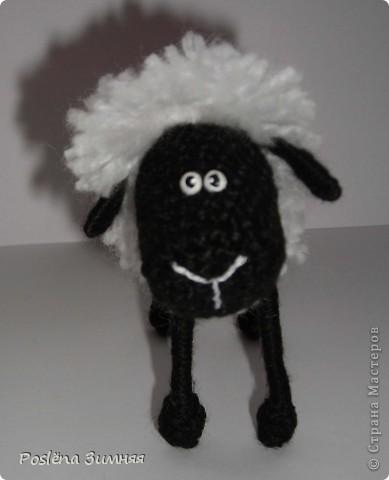 Пара овечек. фото 18