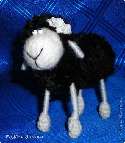 Пара овечек. фото 13